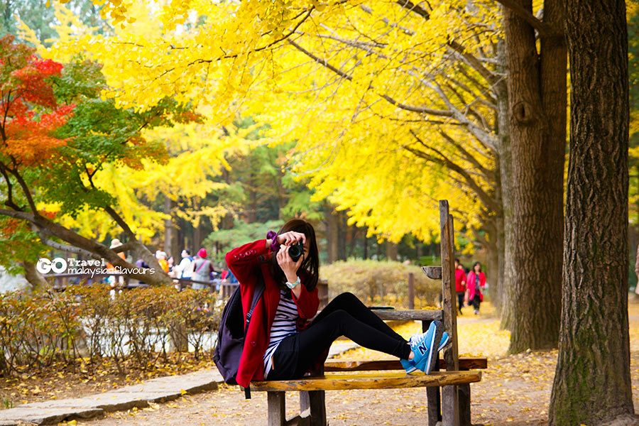 Top 5 Most Beautiful Fall Foliage Destinations In Asia