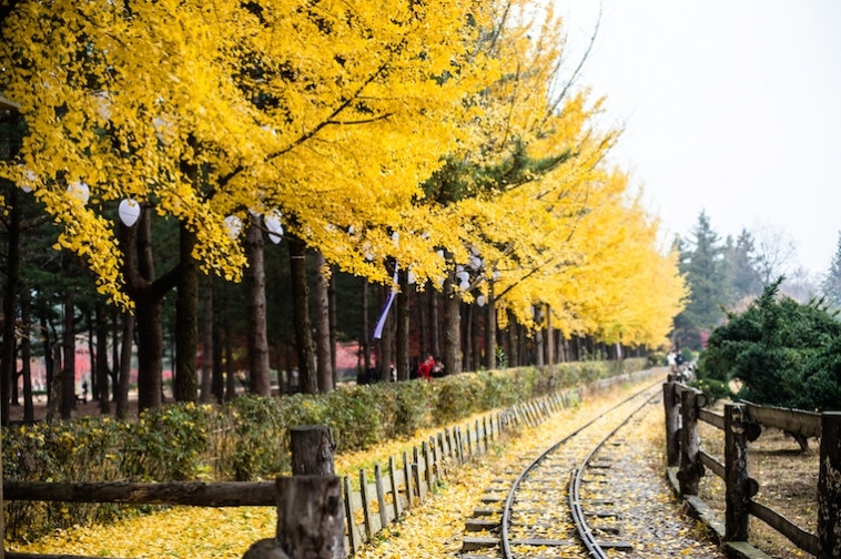 nami island autumn fall foliage destinations fall foliage places (1)