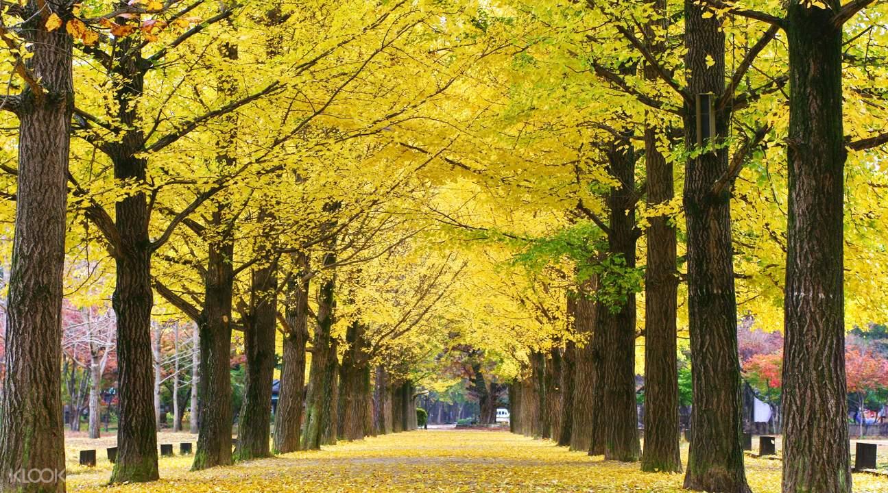 nami island autumn fall foliage destinations fall foliage places (1)