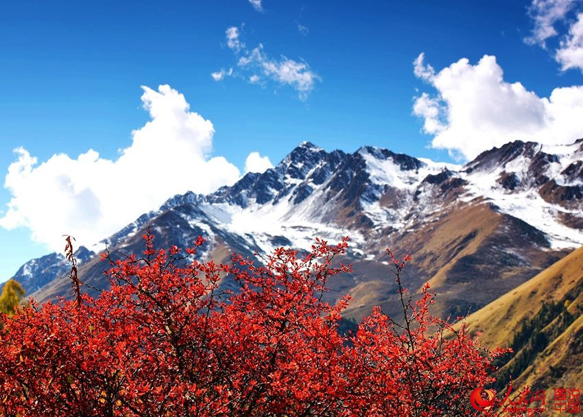 nepal autumn best fall foliage destinations in asia (1)