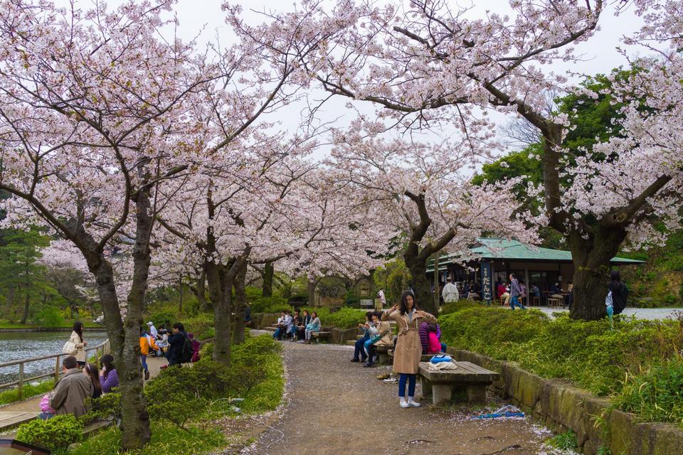 sankeien-garden-photo