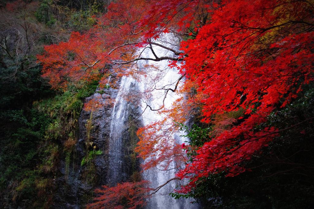 Mino Falls (Osaka)1