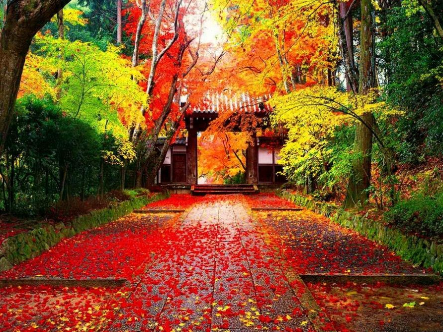 japanese autumn leaves (1)