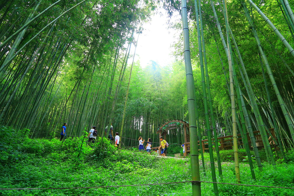 Damyang Bamboo Forest1