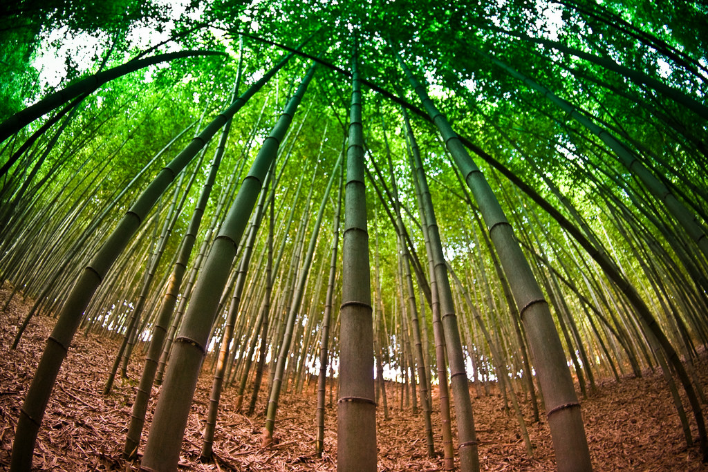 Damyang Bamboo Forest2
