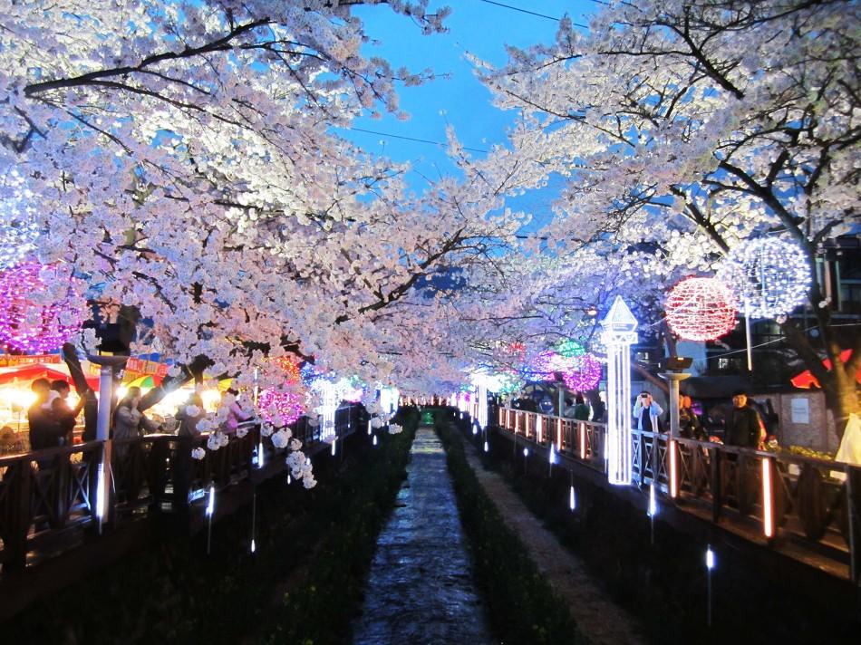 Jinhae cherry blossom festival12 fun things to do in korea top things to do in south korea fun things to do in south korea