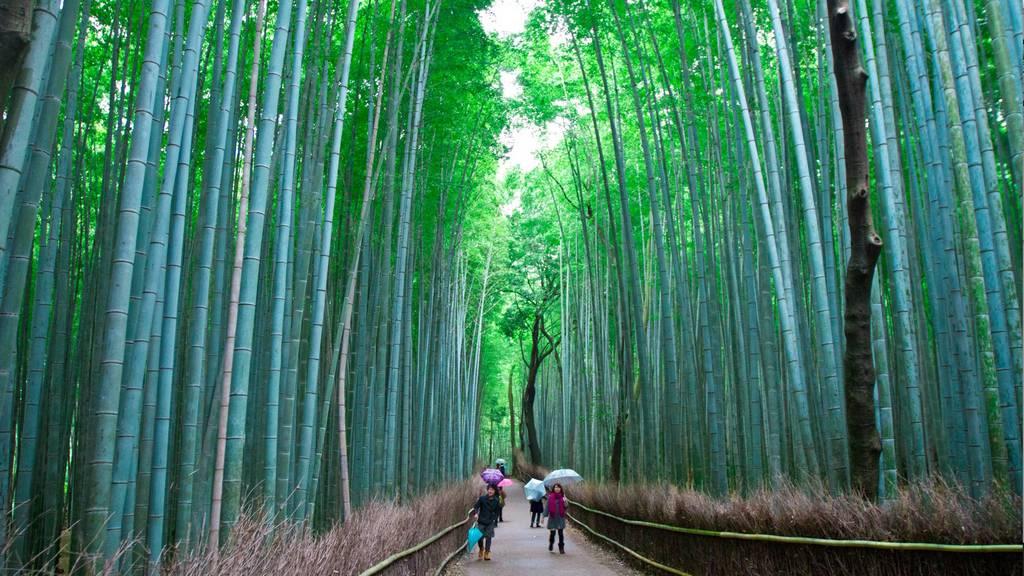 Arashiyama-Bamboo-Forest-Kyoto-Japan