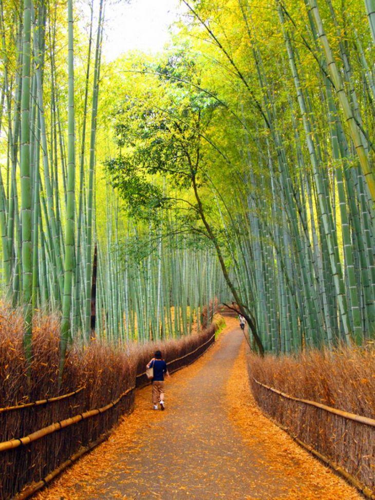 Sagano_Bamboo_Forest-06