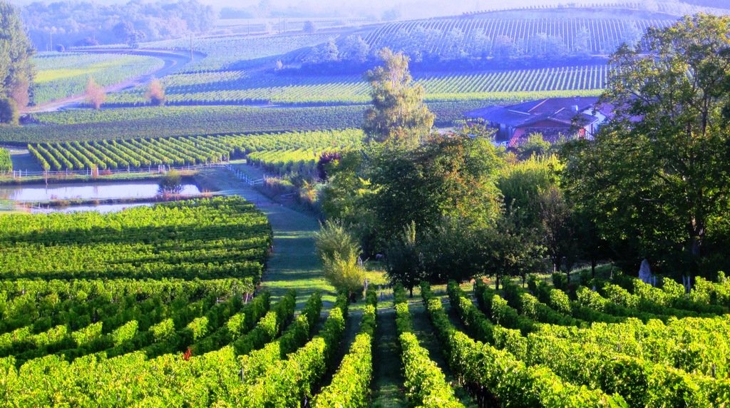 bordeaux_vineyard best cities for honeymoon in europe Picture: European honeymoon destinations ideas blog.