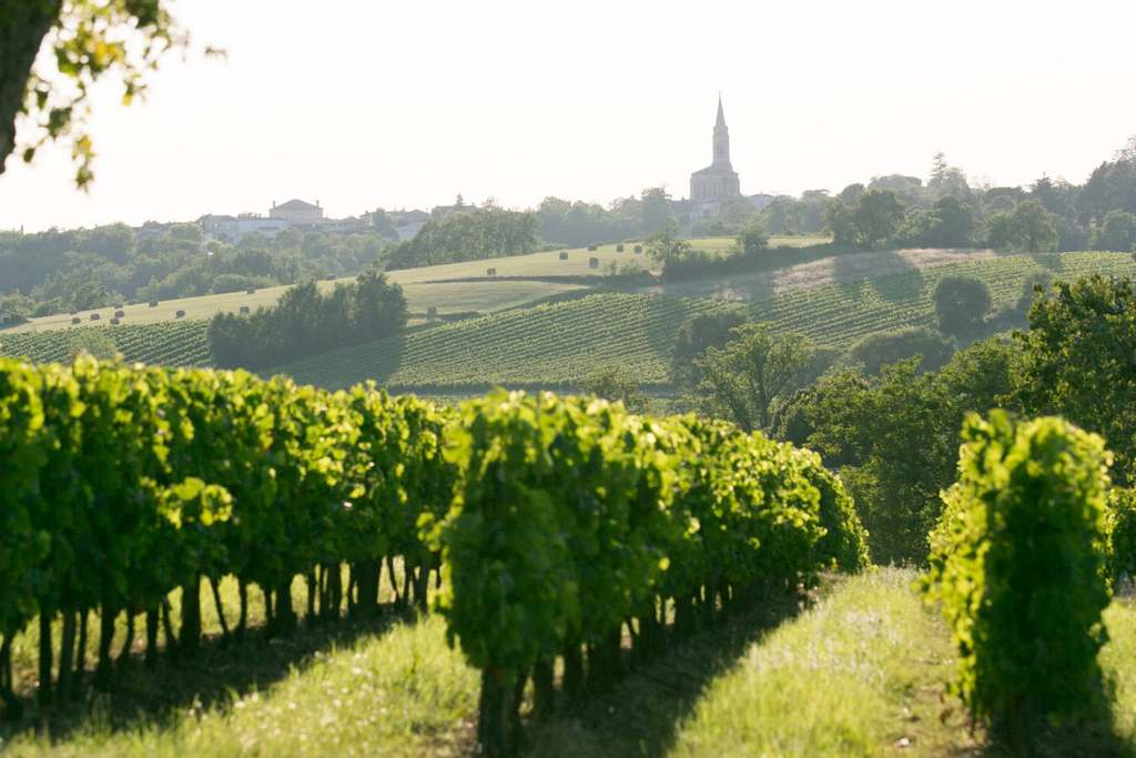 bordeaux_vineyard best cities for honeymoon in europe