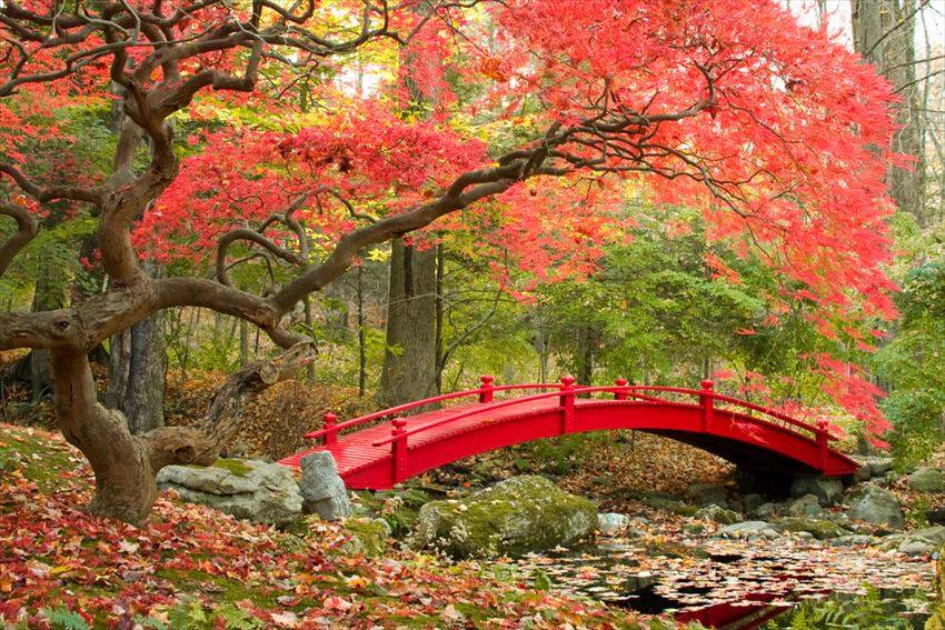 Garden in Japan japanese culture traditions japanese culture facts