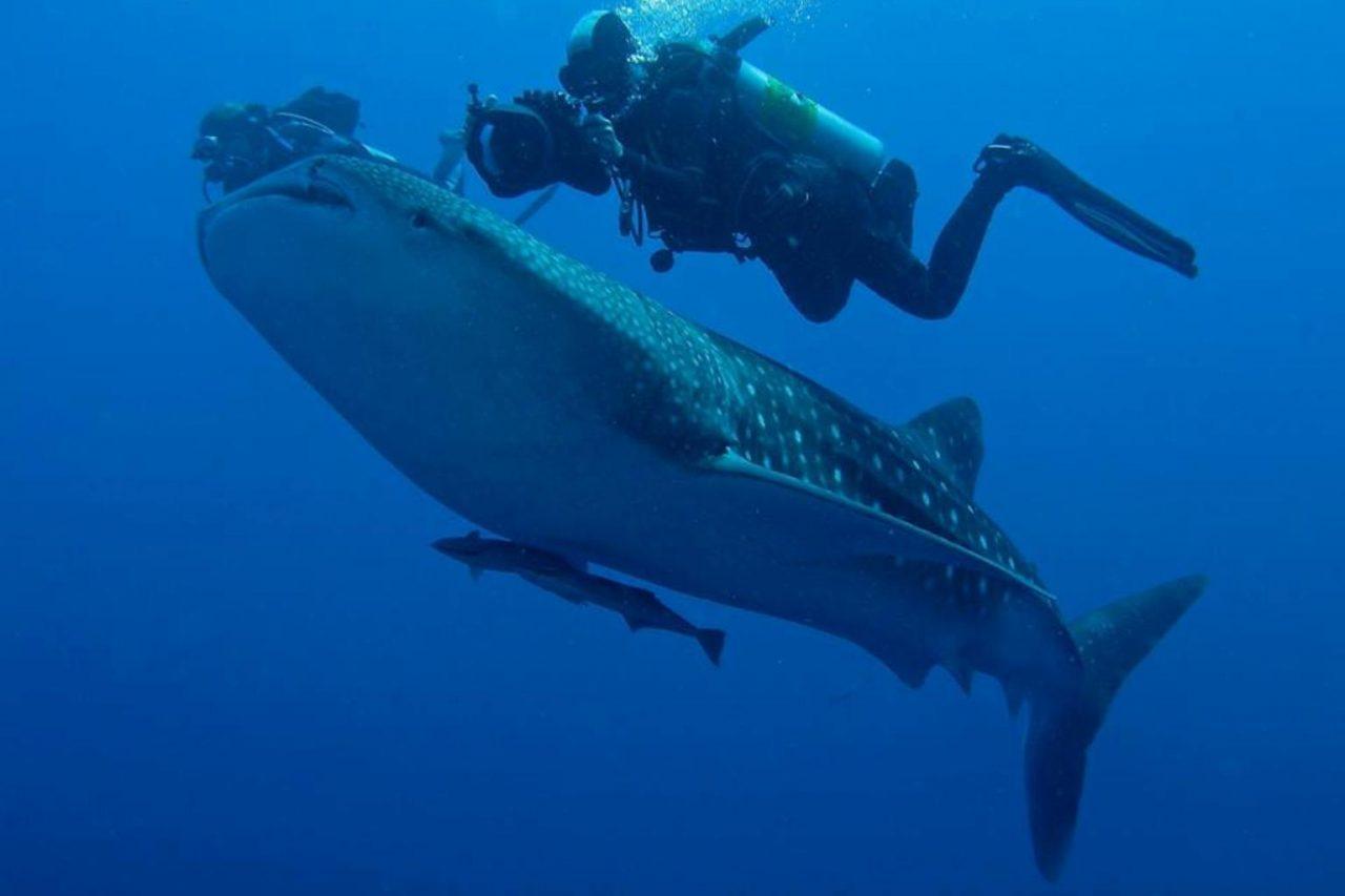 Sharks Reef, Ras Mohammed,