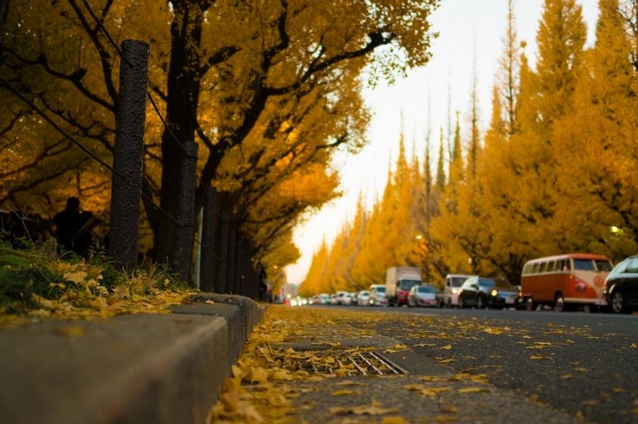 Meiji-jingu Ginkgo Avenue
