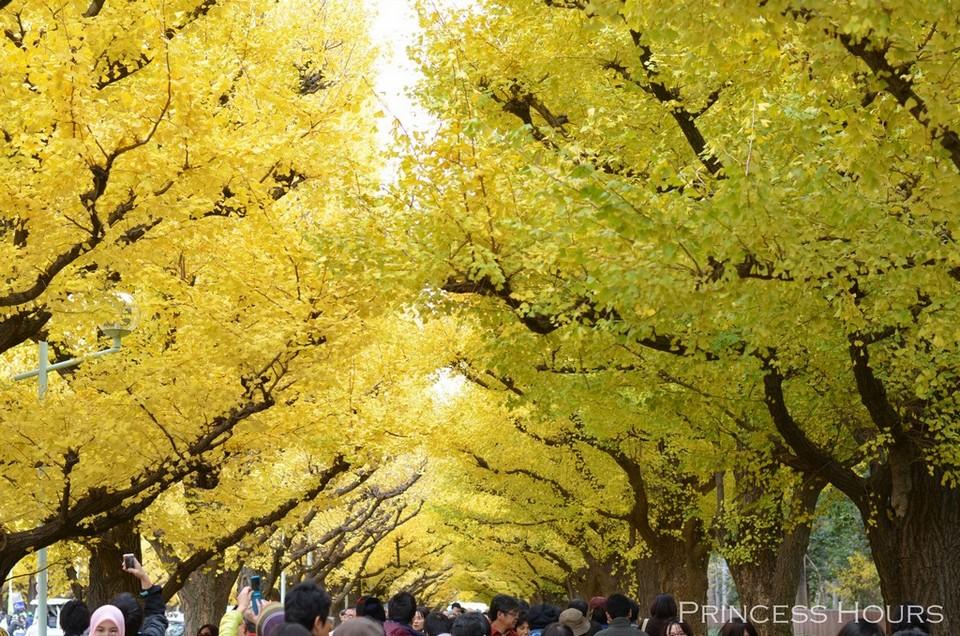 Credit:Ginkgo Avenue Tokyo blog.