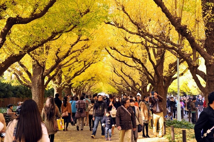 Pedestrians view Ginkgo trees in Meiji Jingu Gaien Park, in Tokyo's Shinjuku Ward