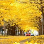 Meiji-jingu Gaien — One of the best places to see autumn leaves in Tokyo