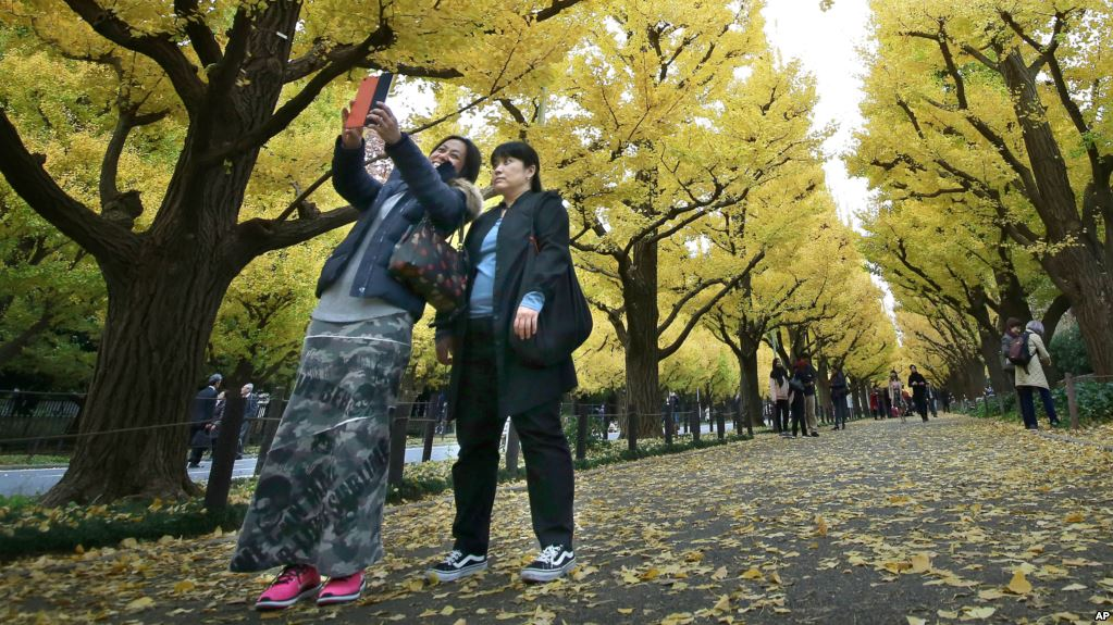 Women take a selfie with yellow leaves of ginkgo trees at Jingu Gaien park