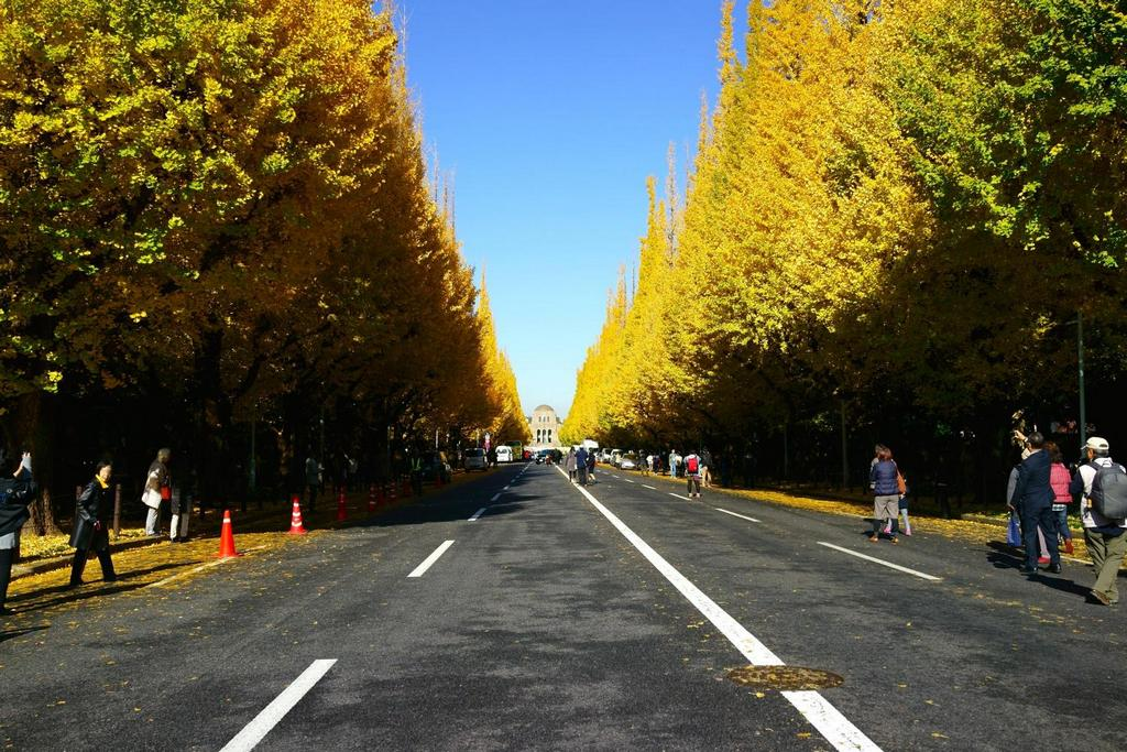 The Gingko Avenue and Meiji Memorial Picture Gallery