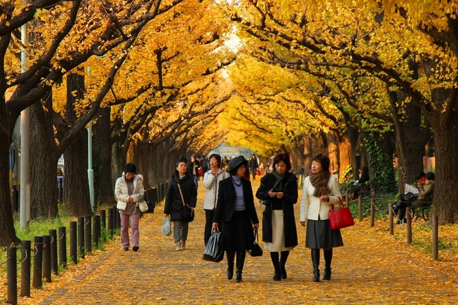 Despite the cold weather, many visitors flocked the gorgeous avenue.