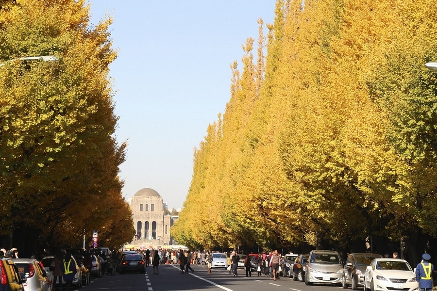 Tokyo: The autumn leaves of Gingko - Meiji Jingu Gaien