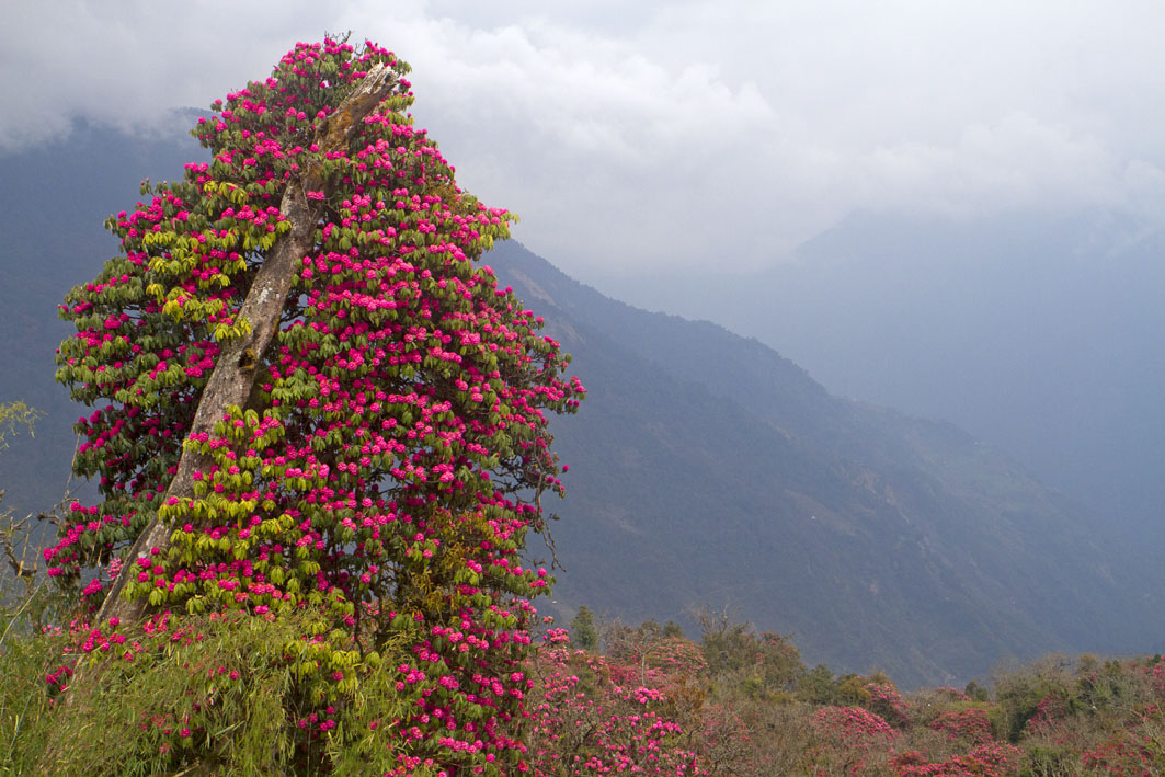 the-himalayas flowers himalayan treks for beginners himalaya hiking tips himalaya trek for first timers