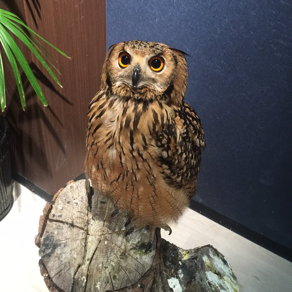 Owl Shrine Asakusa tokyo (1)