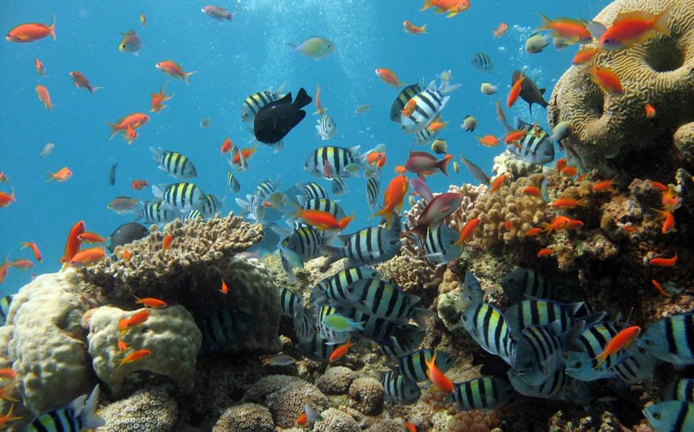 sealife-at-the-similan-islands