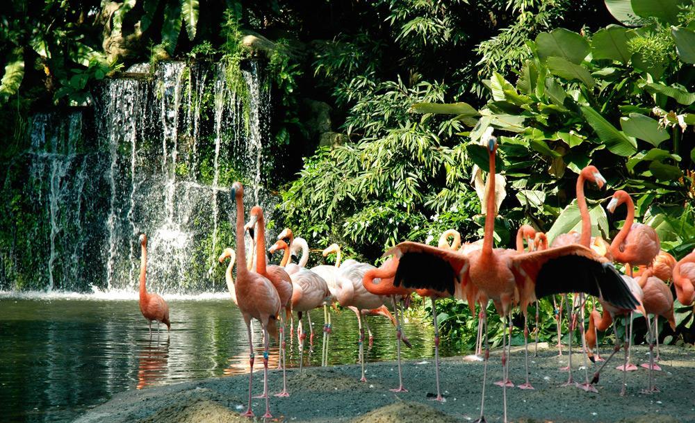 jurong-birdpark Image: Singapore itinerary 4 days budget blog.