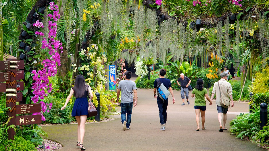 jurong-birdpark singapore itinerary 4 days what to do in singapore in 4 days