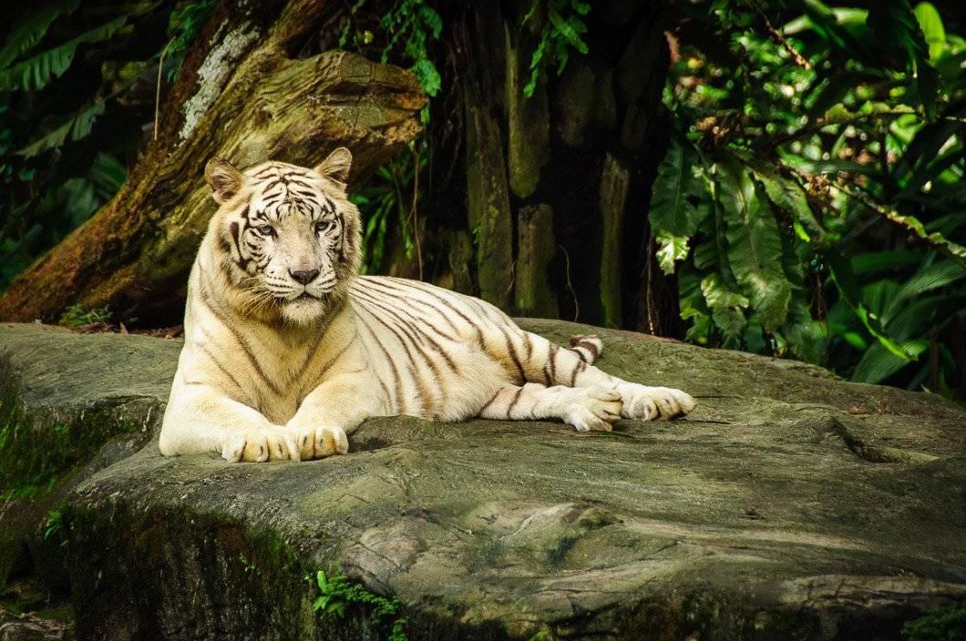 River Safari.