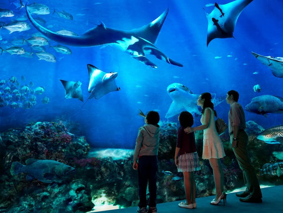 The SEA Aquarium3