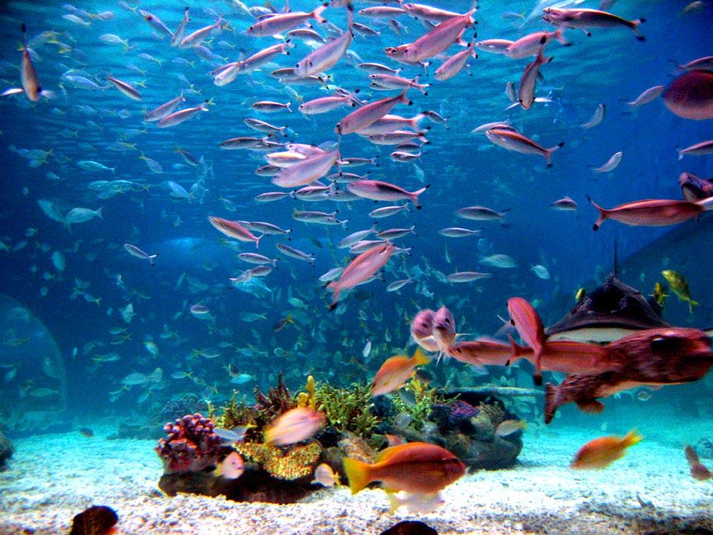 The SEA Aquarium5