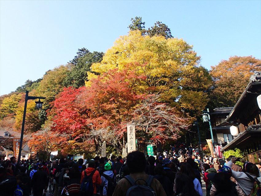 Area Takao