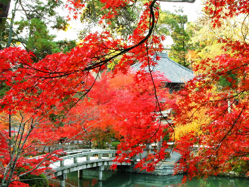 Eikando Zenrinji kyoto autumn best places to see autumn leaves in kyoto