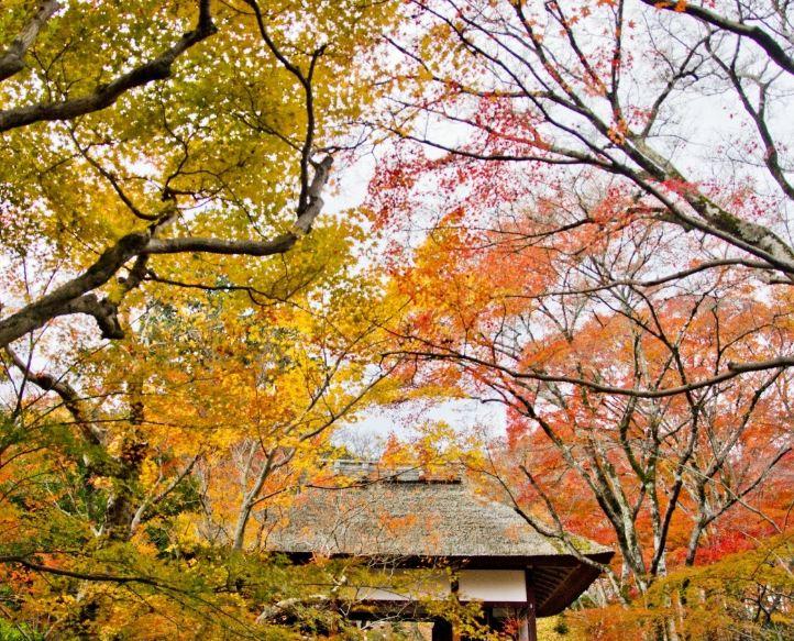 Jokakko-Ji Temple1