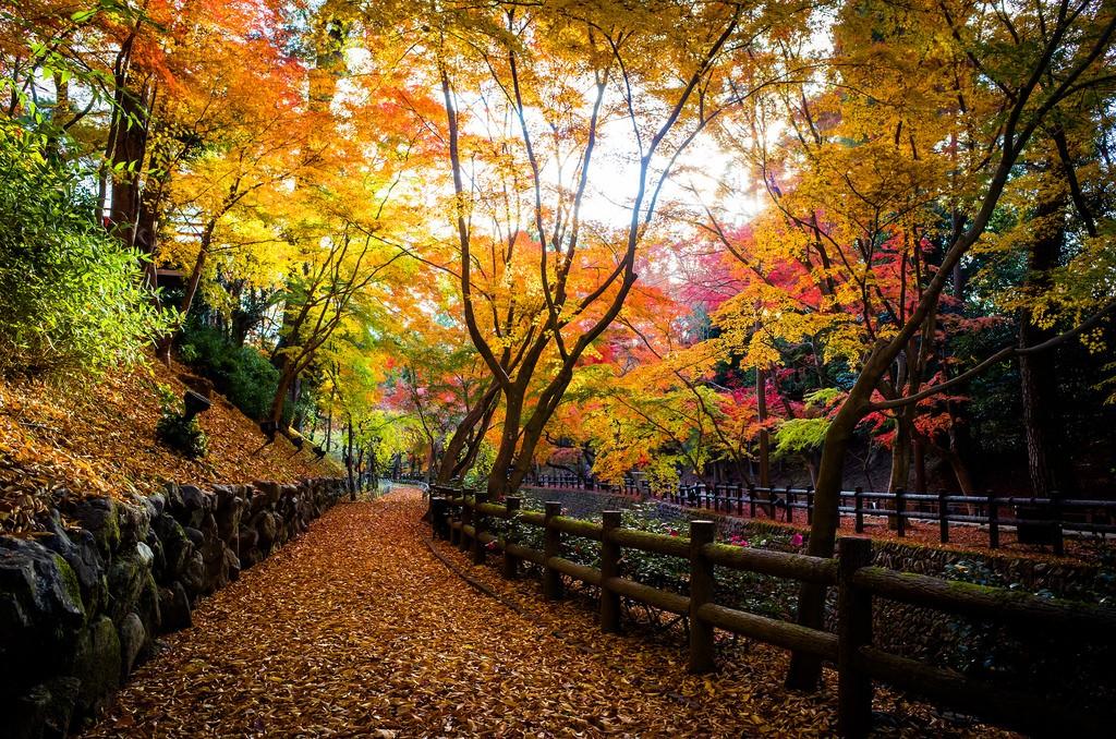 Kitano Tenmangu Shrine1