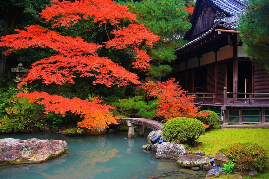 Shorenin Temple2 kyoto autumn best places to see autumn leaves in kyoto