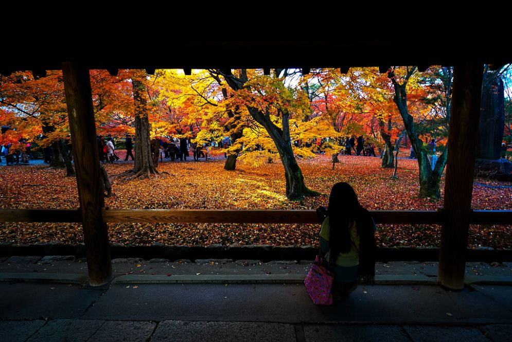 Tofuku-Ji Temple1 Credit: best places to see autumn leaves in Kyoto blog.