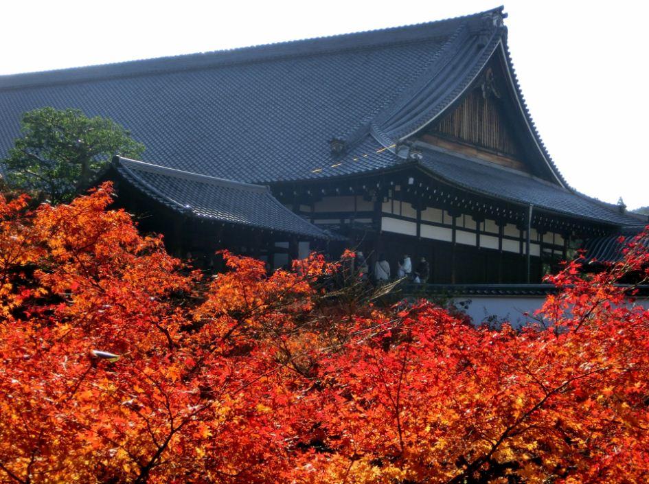 Tofuku-Ji Temple12