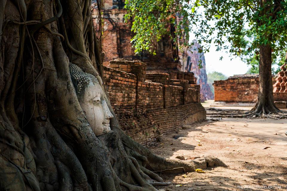 ayutthaya budda head