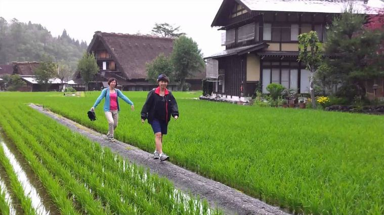 walking along rice