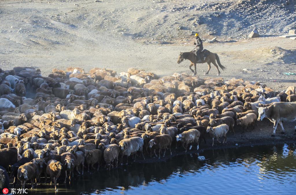 Xinjiang Uyghur animals