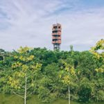"Explore Pa Nai Krung of Bangkok — The ""fairy"" forest built from … landfill of the Thai"