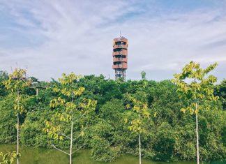 forest in the city bangkok pa nai krung bangkok (2)