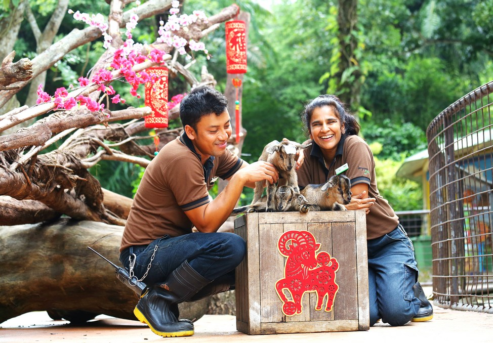 Singapore zoo singapore zoo guide singapore zoo travel tips singapore zoo tips