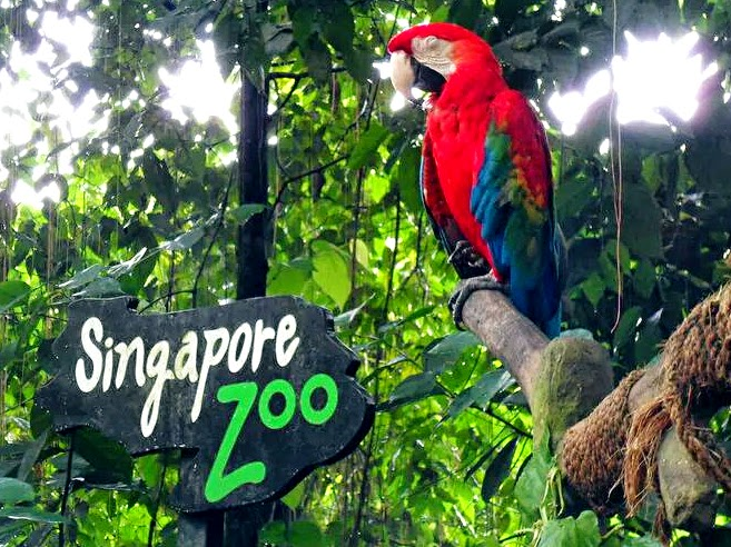 Singapore zoo2 singapore zoo guide singapore zoo travel tips singapore zoo tips