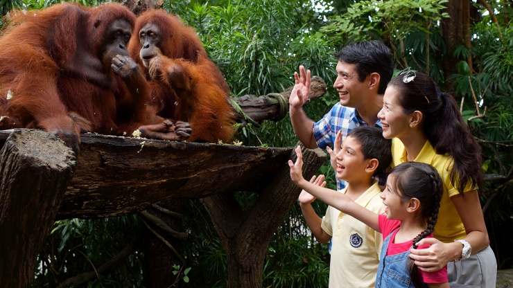 Singapore zoo3 singapore zoo guide singapore zoo travel tips singapore zoo tips