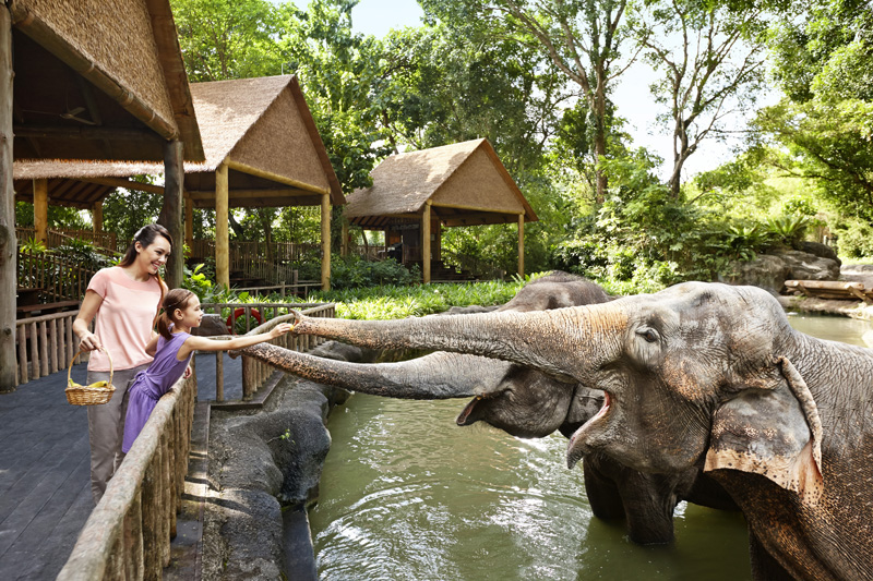 Singapore zoo4 singapore zoo guide singapore zoo travel tips singapore zoo tips