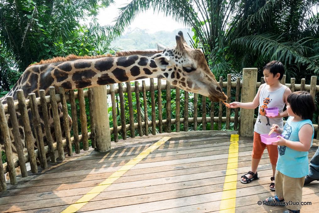 The singapore zoo1