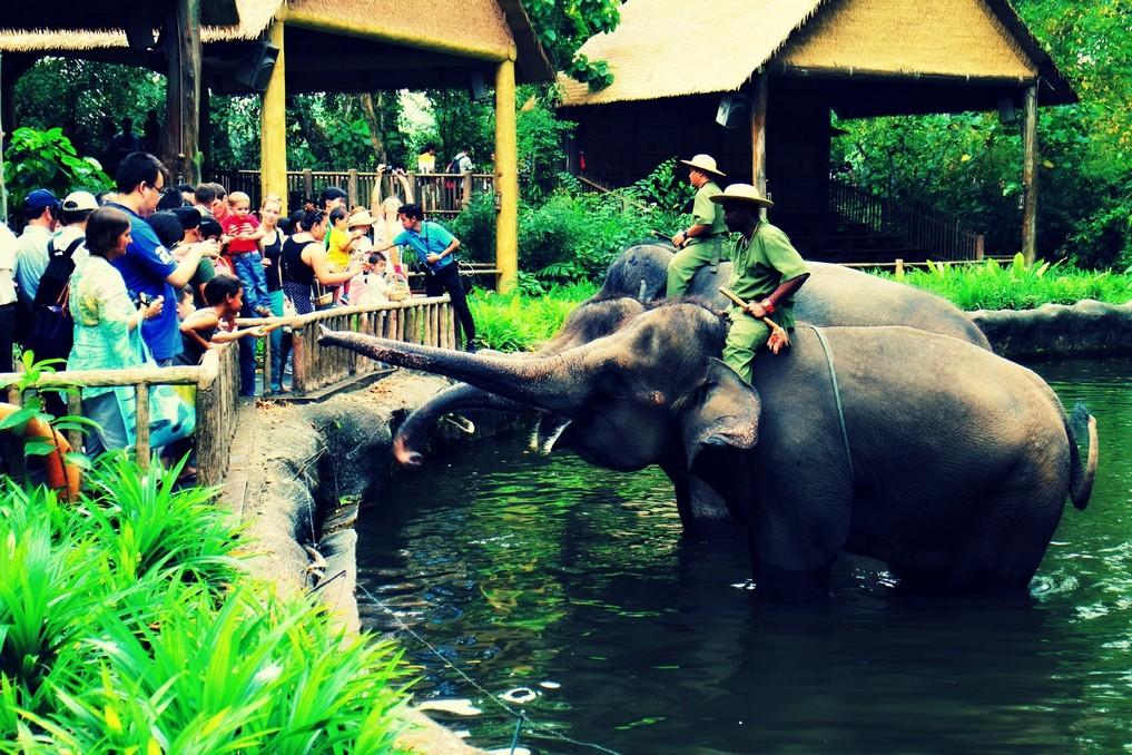 The singapore zoo2